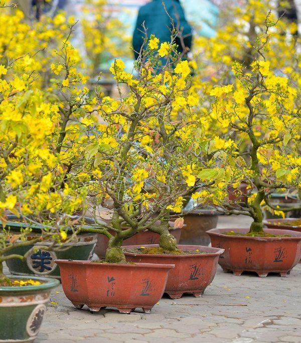 Chợ hoa Tết Phan Thiết